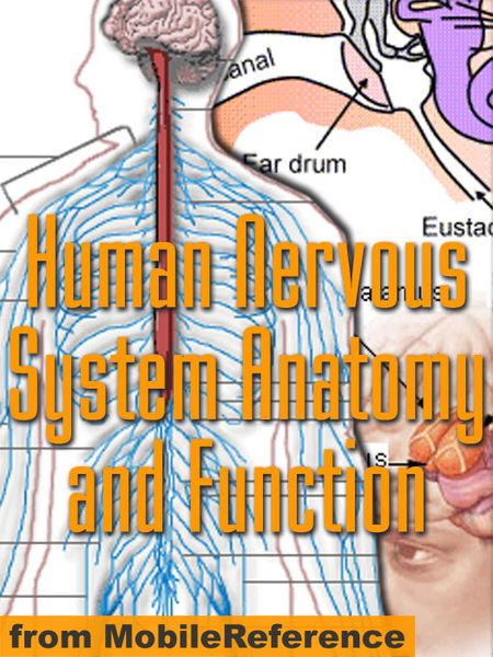 Human Nervous System Anatomy and Function Study Guide