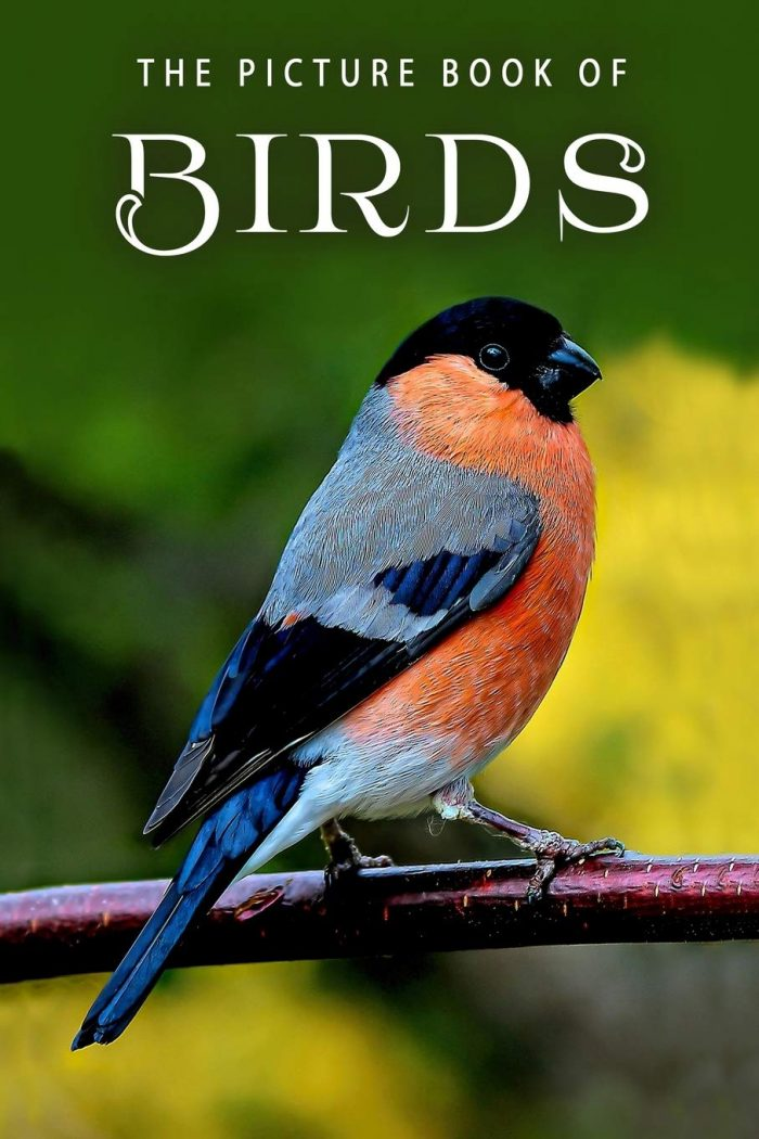 The Picture Book of Birds: A Gift Book for Alzheimer's Patients and Seniors with