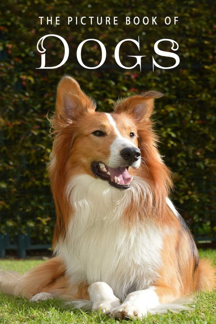 The Picture Book of Dogs: A Gift Book for Alzheimer's Patients and Seniors with